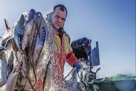 Fischer mit vollem Heringsnetz