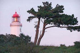 Leuchtturm und Windflüchter auf Hiddensee